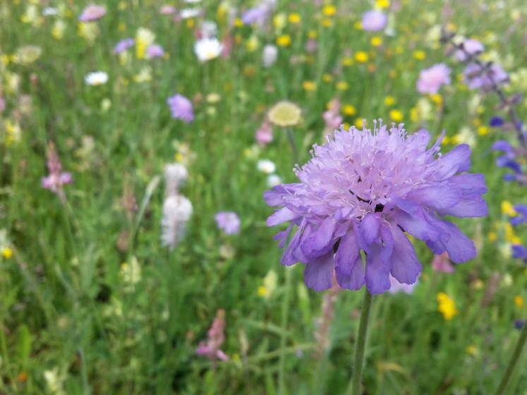 Insektenfreundliche Blühwiese