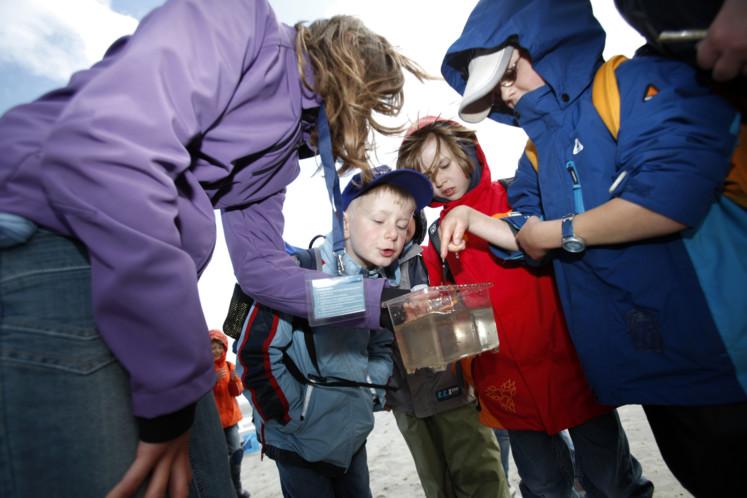 Junior Ranger im Wattenmeer